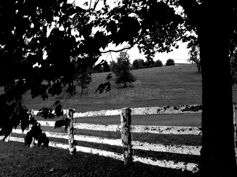 Download Fence black & white stock photo. Image of trees, landscapes - 24938