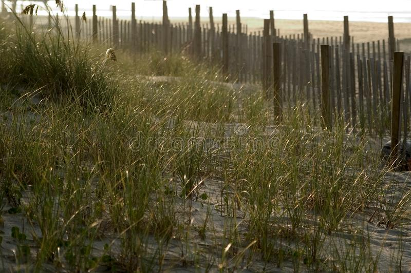 Download Fence in the Dunes stock photo. Image of sunrise, wooden - 15600