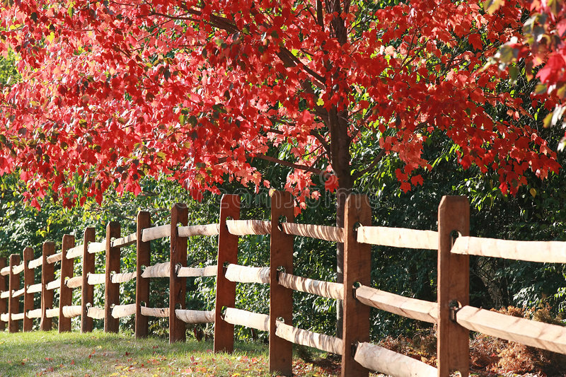 Fence in the Fall stock image