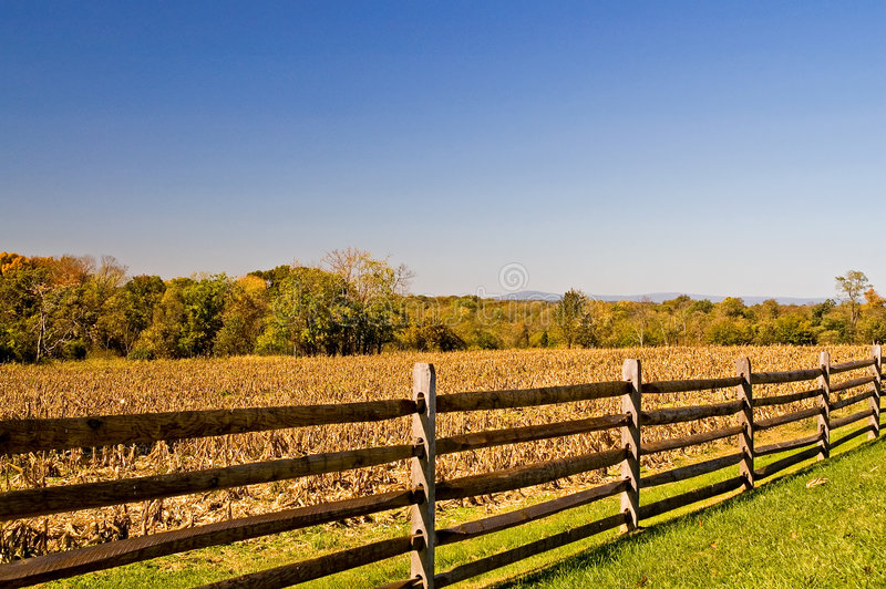 Fence and Fall Cornfield royalty free stock photography