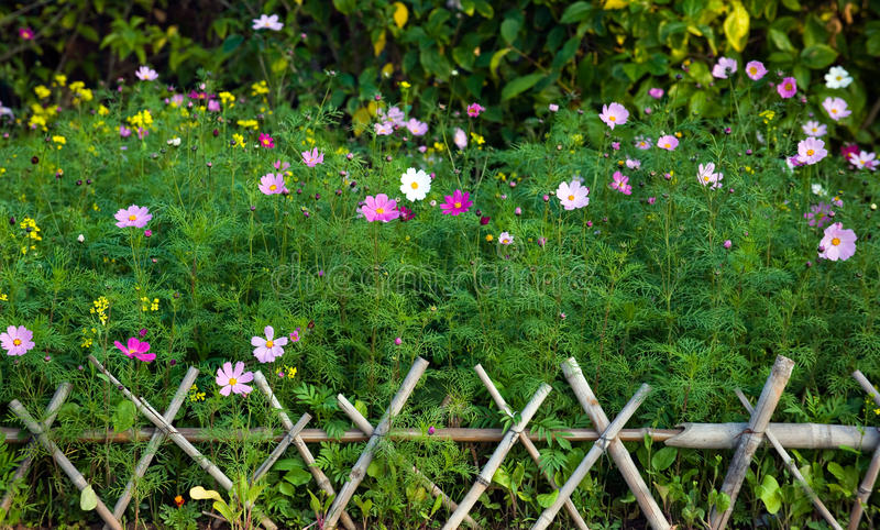 Download Fence and flowers stock image. Image of grass, beautiful - 12917423