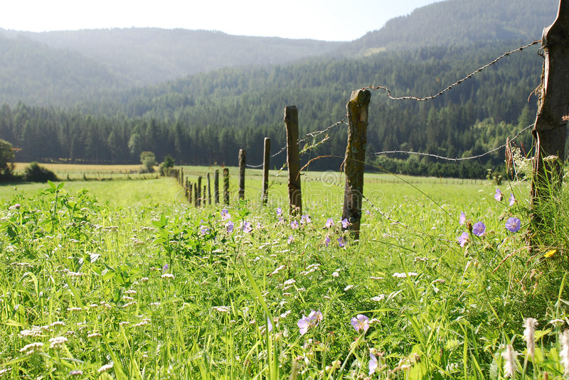 Fence With Flowers Royalty Free Stock Images