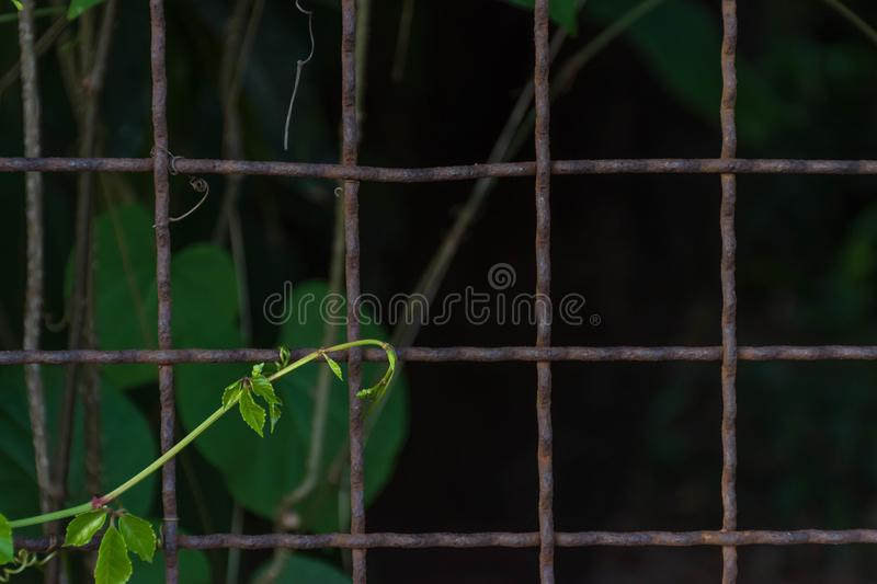 Fence fragment from wire royalty free stock image