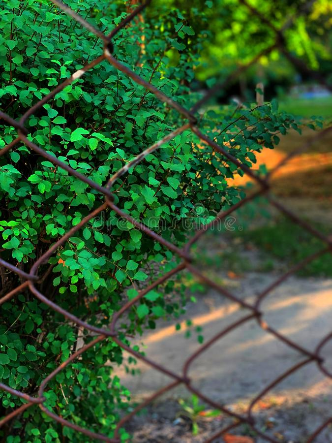 Fence netting netting, green bush behind the fence. Restriction of movement. Metal mesh netting royalty free stock photo