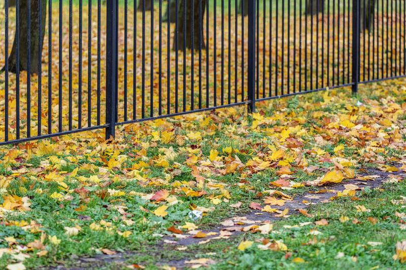Fence of the park in autumn stock image