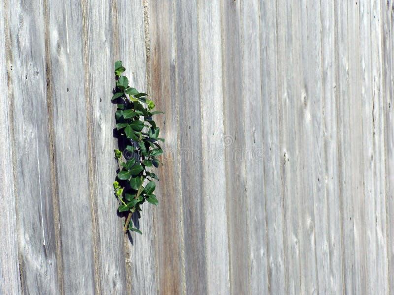 Fence plant stock image