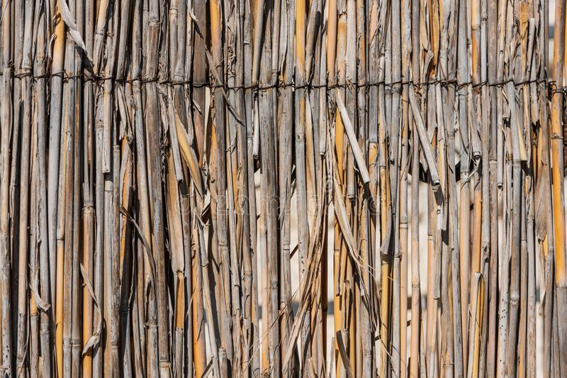 Fence of reeds close-up stock photography