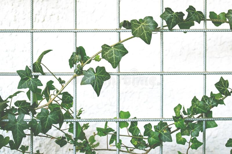 Fence with vine royalty free stock photos