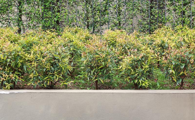 A Fence wall with a small tree.  stock photography