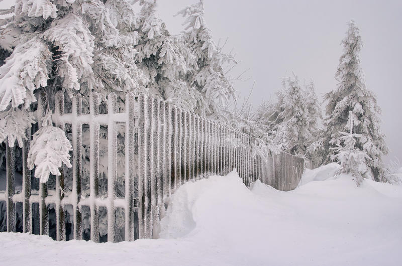 Download Fence in winter stock image. Image of tree, snowbank - 17463837