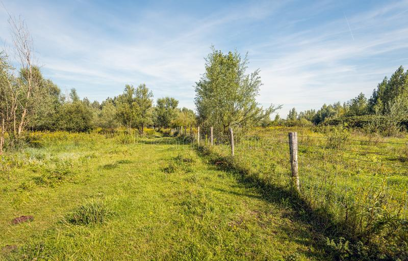 Fence of wooden posts and barbed wire in nature reserve royalty free stock photos