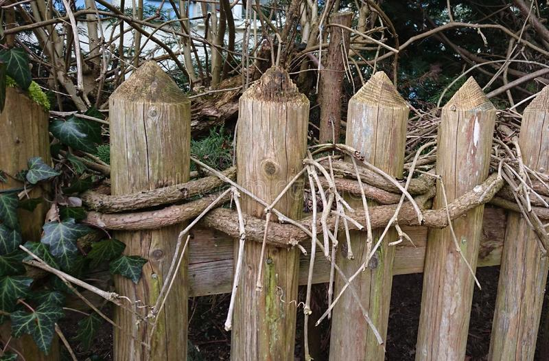 Fence wrapped by roots stock photos