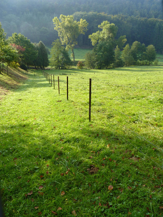 Download Fenced open meadow stock photo. Image of cluster, ground - 16471868