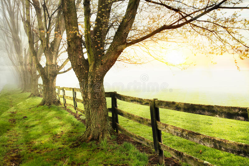 Fenceline y árboles imagen de archivo libre de regalías
