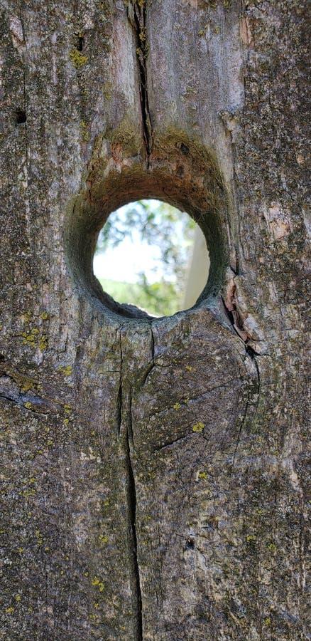 Fencepost de madeira velho com furo foto de stock