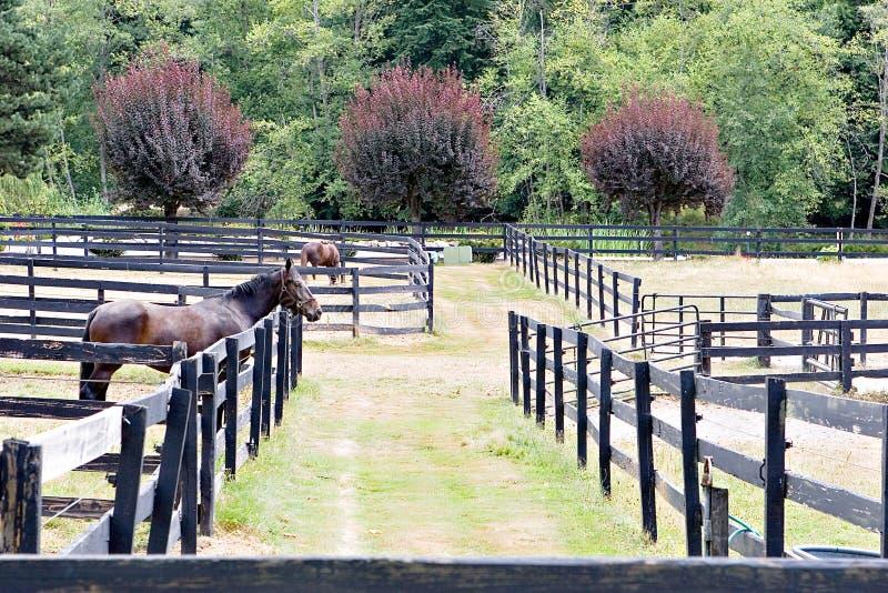 Fences stock image