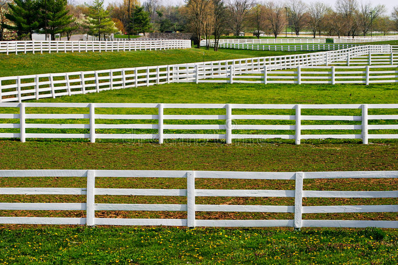 Fences Galore. White Fences And Green Grass During Springtime In Horse Country, Lexington, Kentucky, USA stock photography