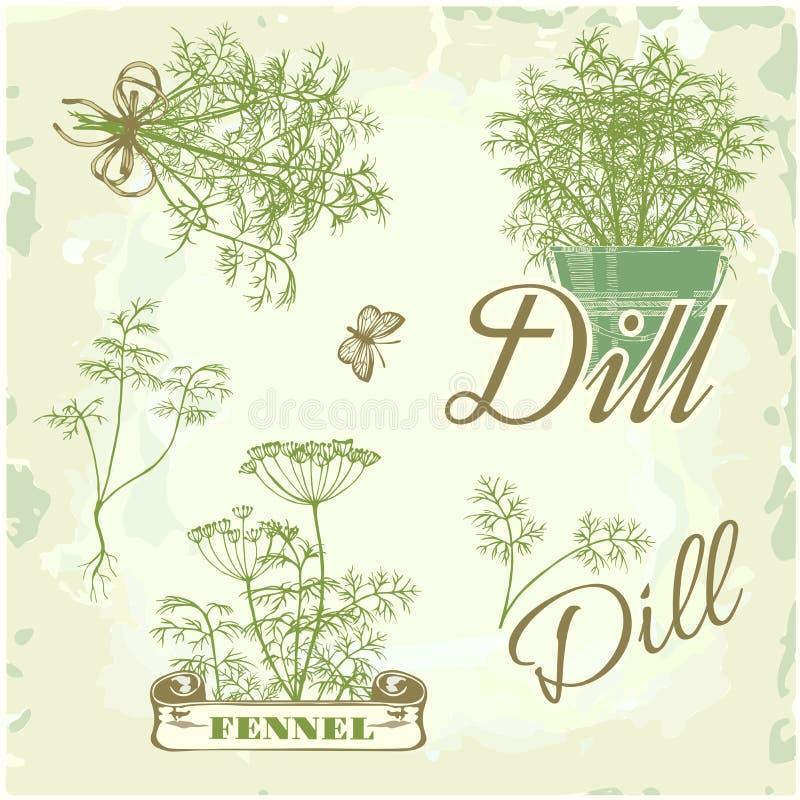 Fenchel, Dill, Kraut, stock abbildung