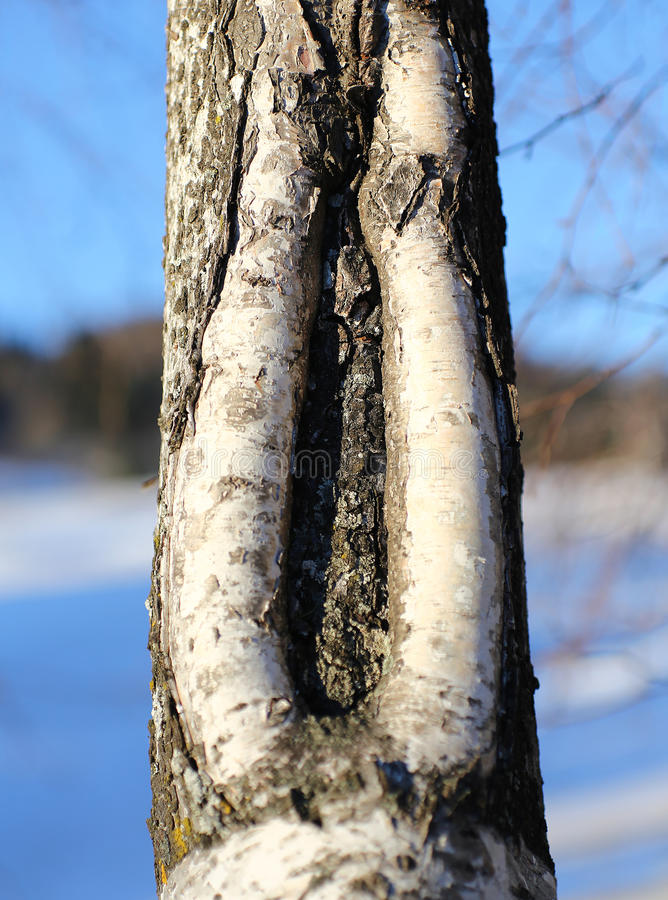 Fendi nel tronco dell'albero come una vagina fotografie stock