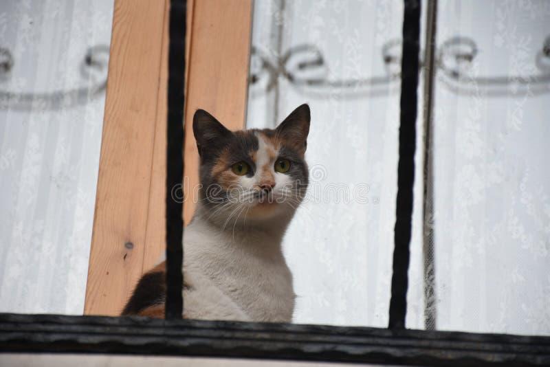Fener-Bezirk in Istanbul und in der Katze lizenzfreie stockfotos