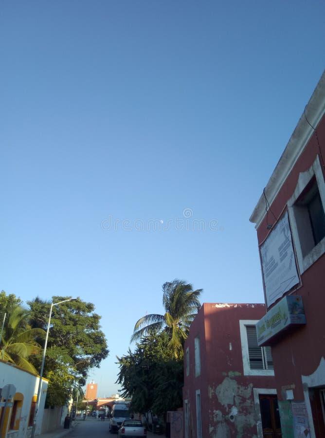Fenicotteri del Messico fotografia stock