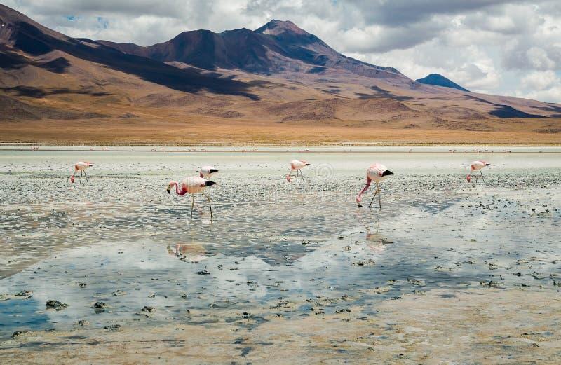 Fenicotteri nel lago fotografie stock
