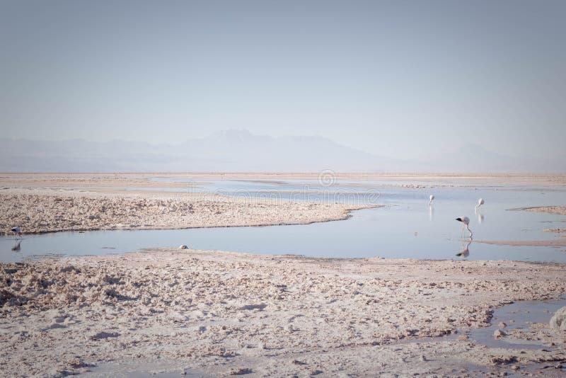 Fenicotteri sul lago fotografia stock libera da diritti