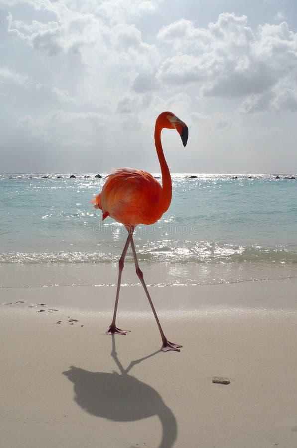 Fenicottero sulla spiaggia fotografia stock libera da diritti