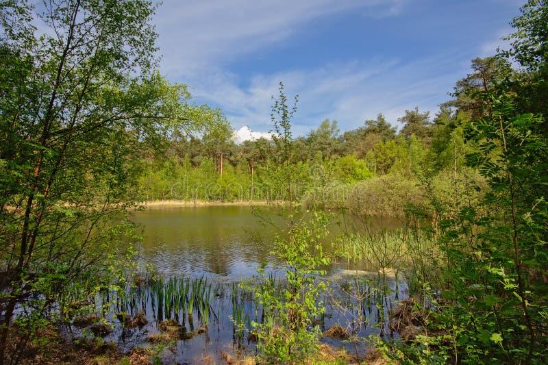 Fenn umgeben durch frische grüne Frühlingsbäume lizenzfreies stockbild