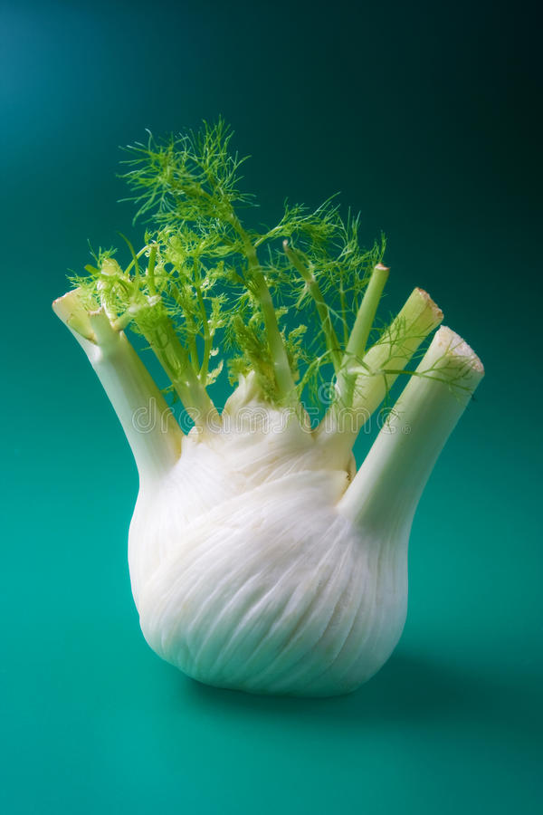 Fennel. Herb on dark background stock photo