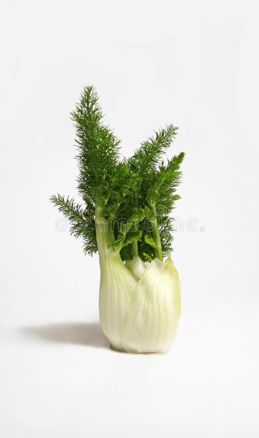 Download Fennel stock image. Image of feathers, nutrition, salad - 8492619
