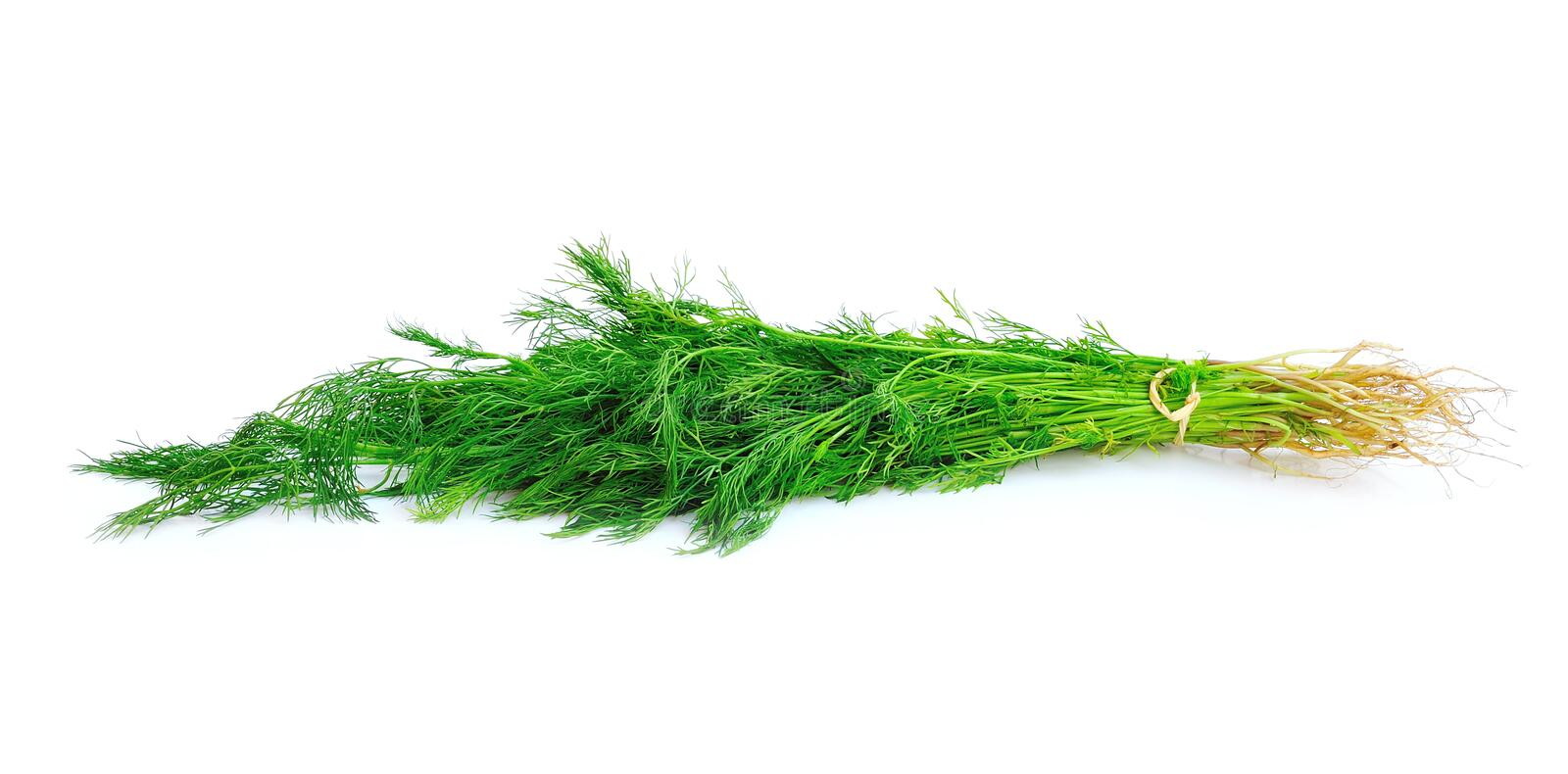 Fennel Bunch Royalty Free Stock Photos
