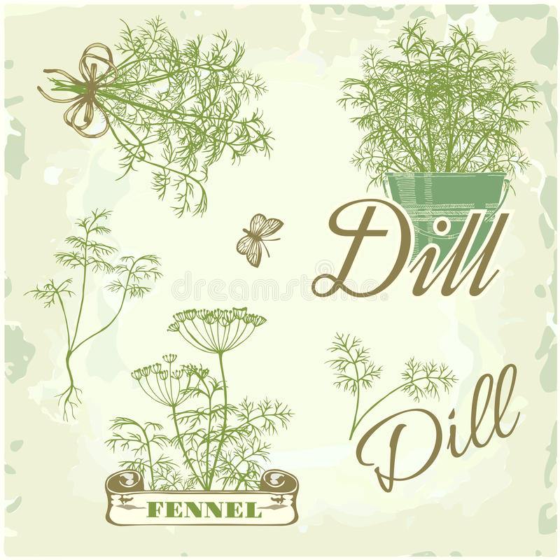 Fennel, dill, herb,. Fennel, dill, herb and plant background, packaging calligraphy stock illustration