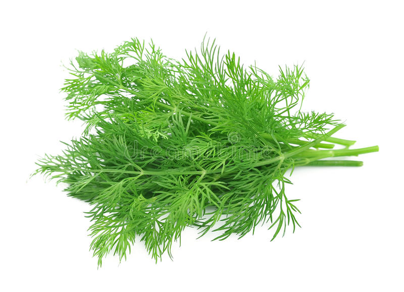 Fennel herbs stock images