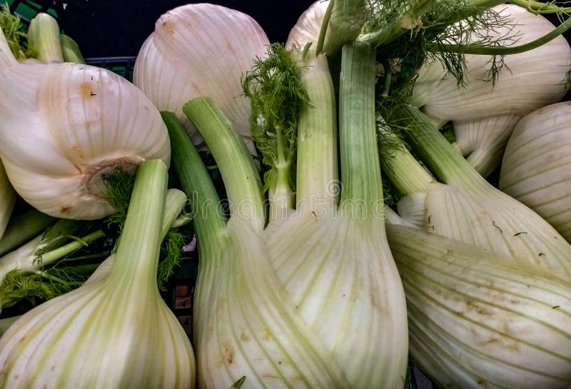Fennel is a Mediterranean herbaceous plant of the Apiaceae family. Known since ancient times for its aromatic properties, its hort stock photography