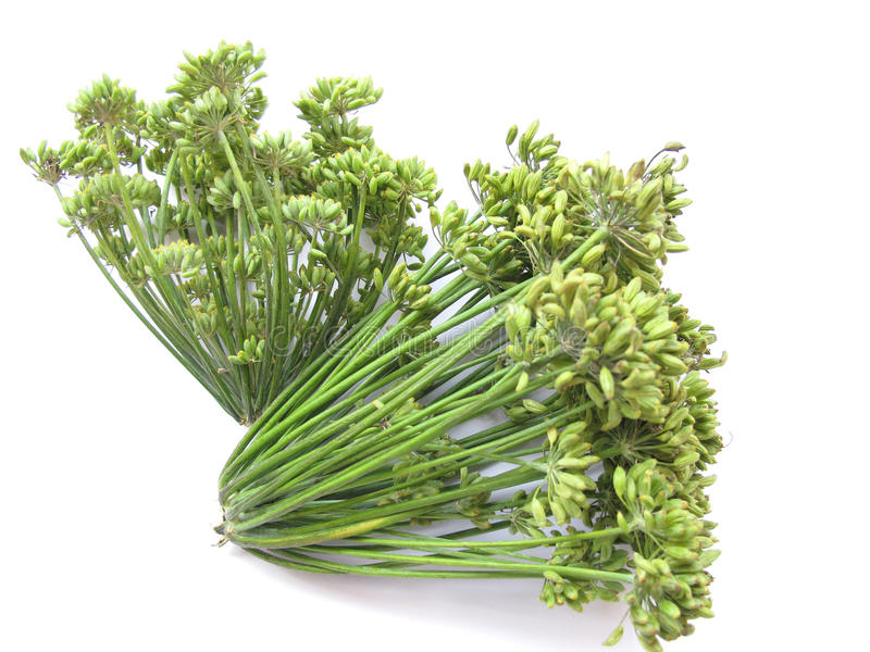Fennel Seeds. Bunch of fresh fennel seed florets isolated on white