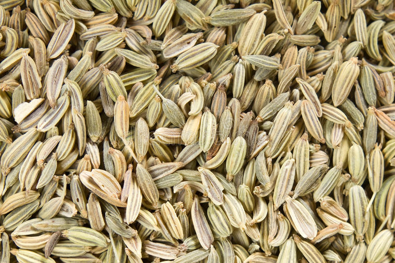 Download Fennel seeds stock photo. Image of many, bowl, gourmet - 25522742