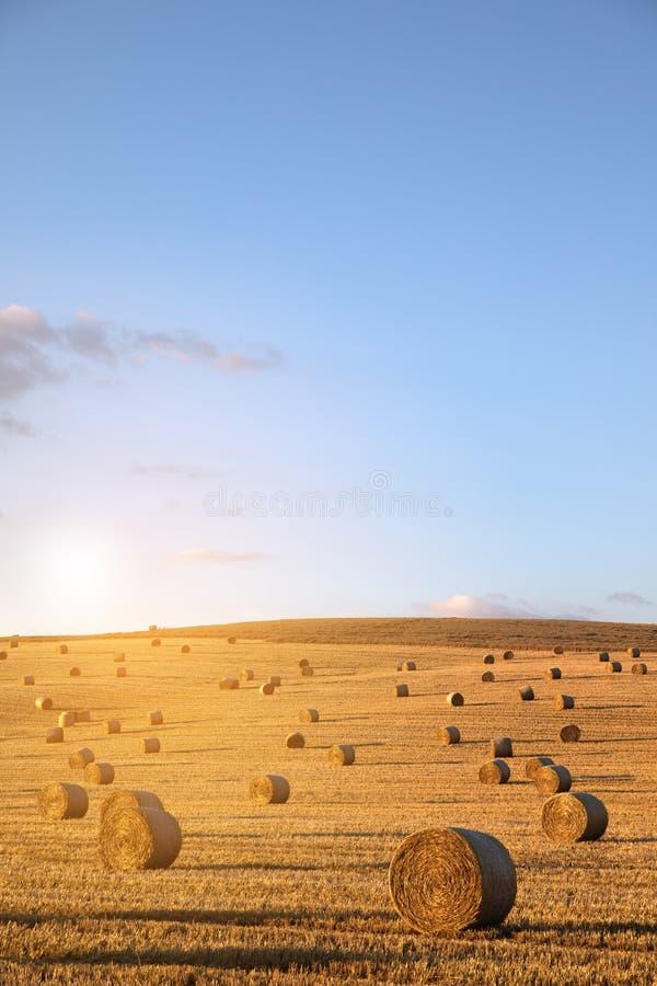 feno-rolo no prado contra o fundo fotos de stock