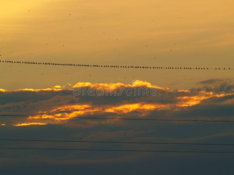 Fenomenale zonsondergang royalty-vrije stock fotografie