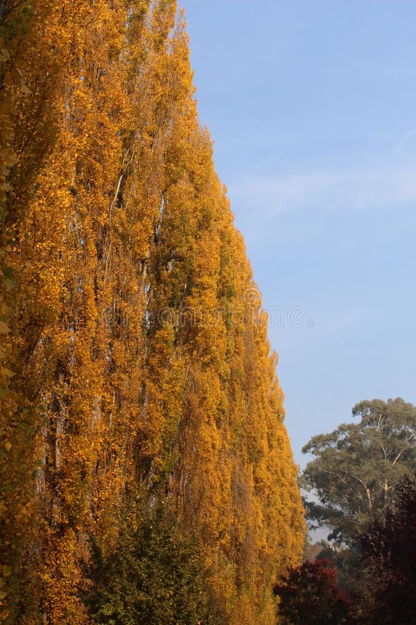Fense d'arbre dans la couleur d'automne photographie stock libre de droits