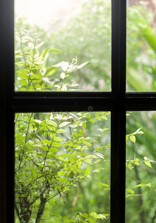 Download Fenster stockfoto. Bild von auszug, architektur, grün - 96925578