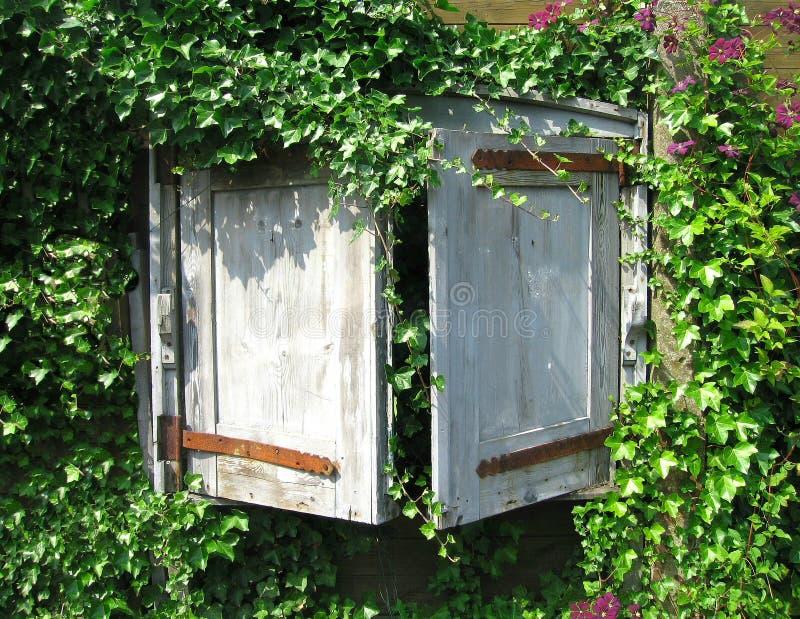 Fenster abgedeckt mit Efeu stockfotos