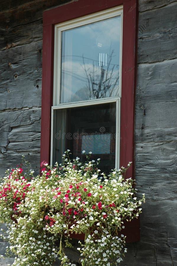 Fenster-Blumen-Kasten lizenzfreie stockfotografie