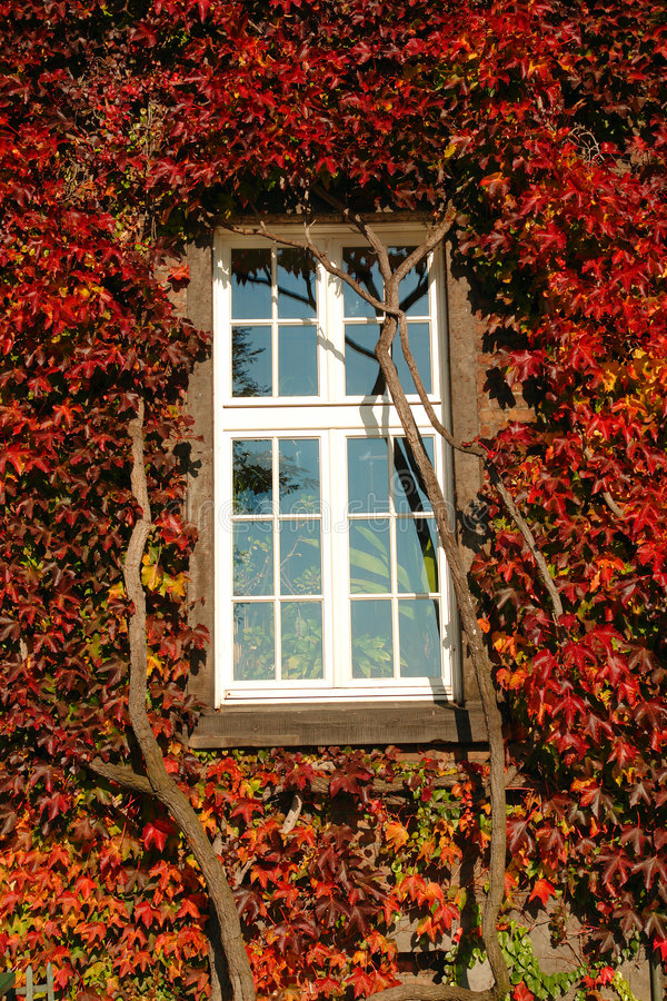 Fenster in den Weinstockblättern stockfotos
