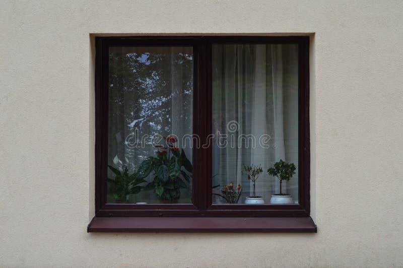 Fenster, Minimalismus, Reflexion, Anlagen lizenzfreie stockbilder