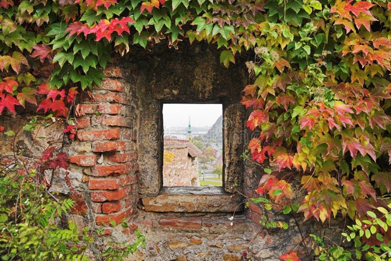 Fenster mit Efeu in der Festungswand lizenzfreie stockbilder
