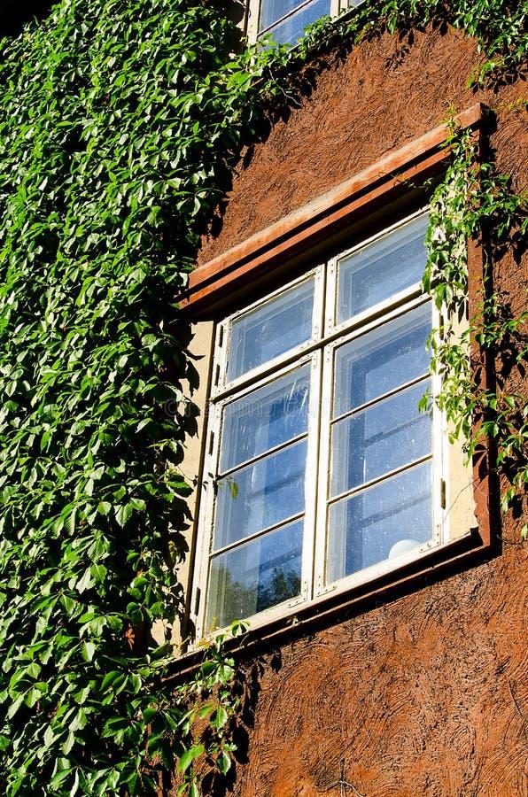 Download Fenster mit grünem Efeu stockfoto. Bild von versteckt - 26354232