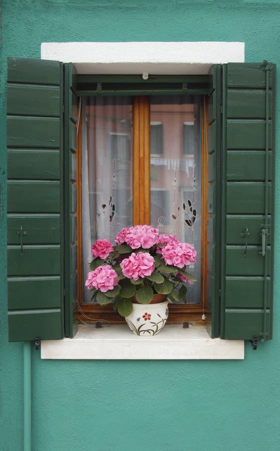 Fenster mit Hydrangea stockfotos