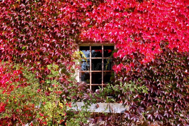 Fenster mit rotem Herbst Laub lizenzfreie stockbilder
