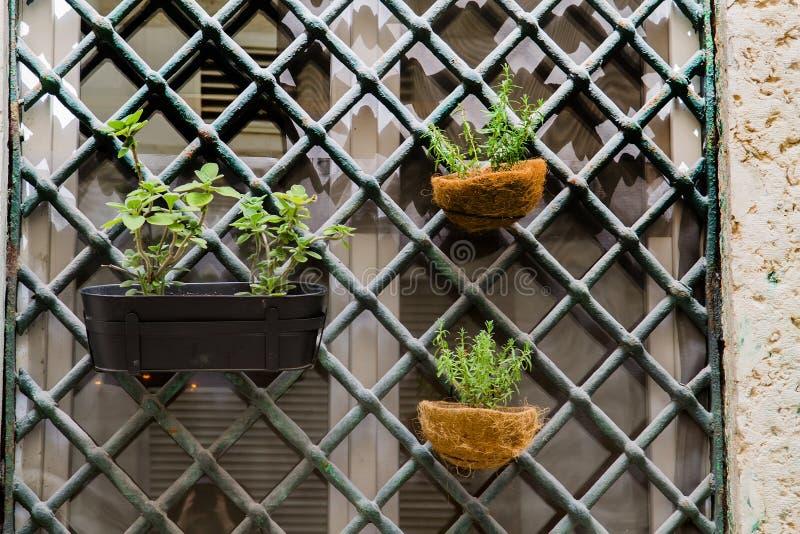 Fenster verziert mit Blumentöpfen lizenzfreie stockfotos
